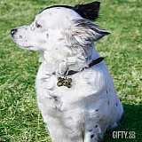 Медальон за куче с име по поръчка за подарък в Gifty.BG