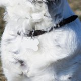 Медальон за куче с десен Гепардова кожа