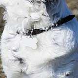Цветна табелка медальон за кучешки нашийник за подарък в Gifty.BG